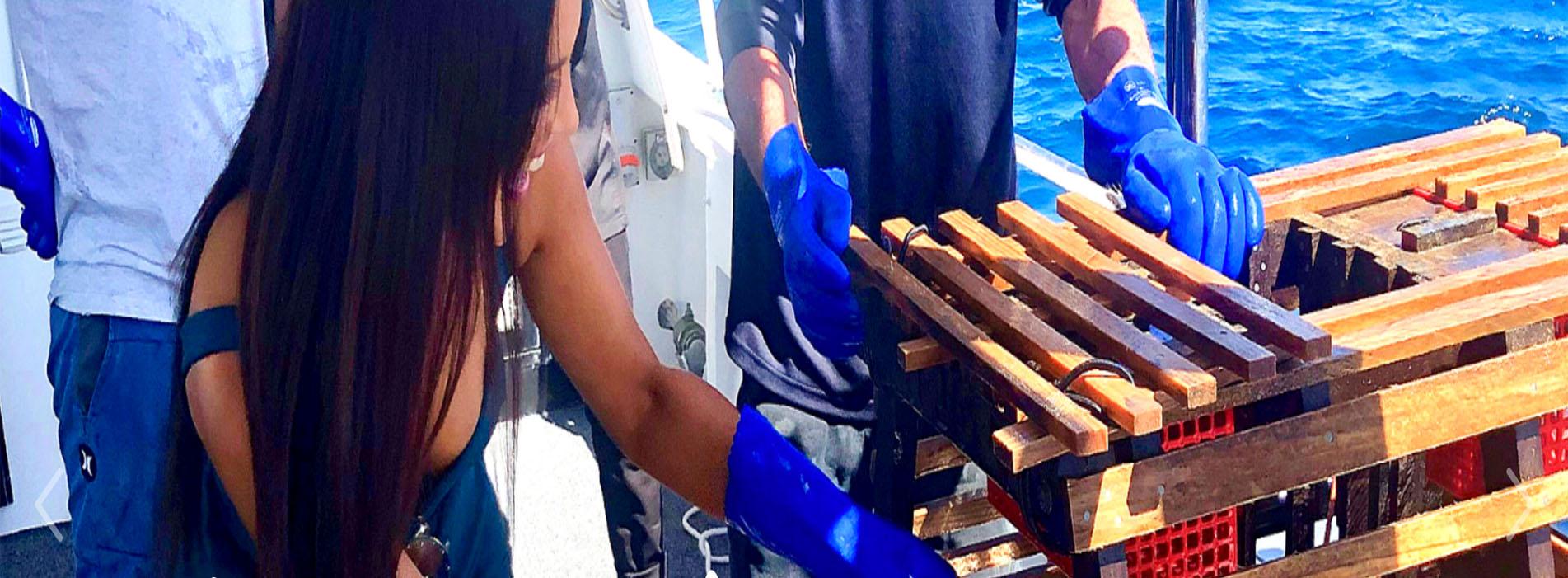 CRAYFISH LOBSTER Catch girl craypot Rottnest cruise