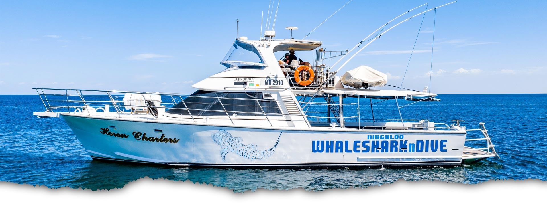 HERON-Emouth whale watching tours swim