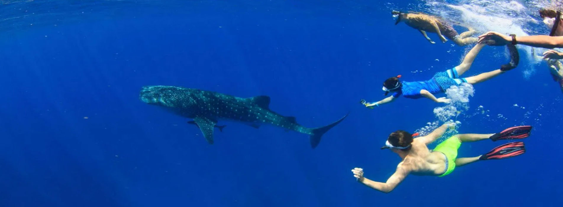 VENTURE-IV-people-in-water-whale-shark