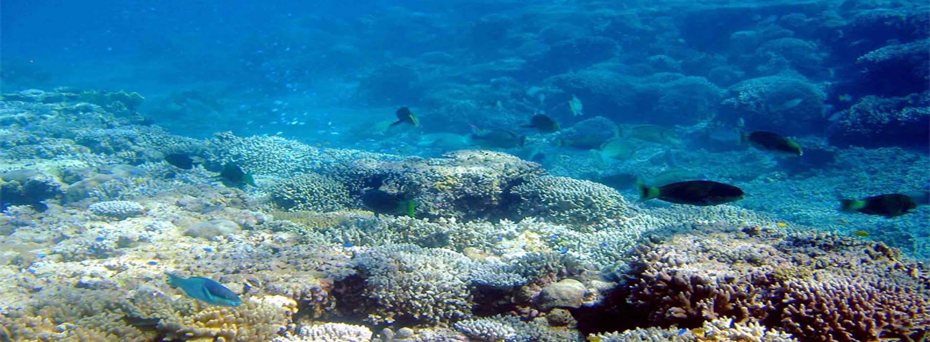 ROWLEY SHOALS Reef Prince fish snorkel dive