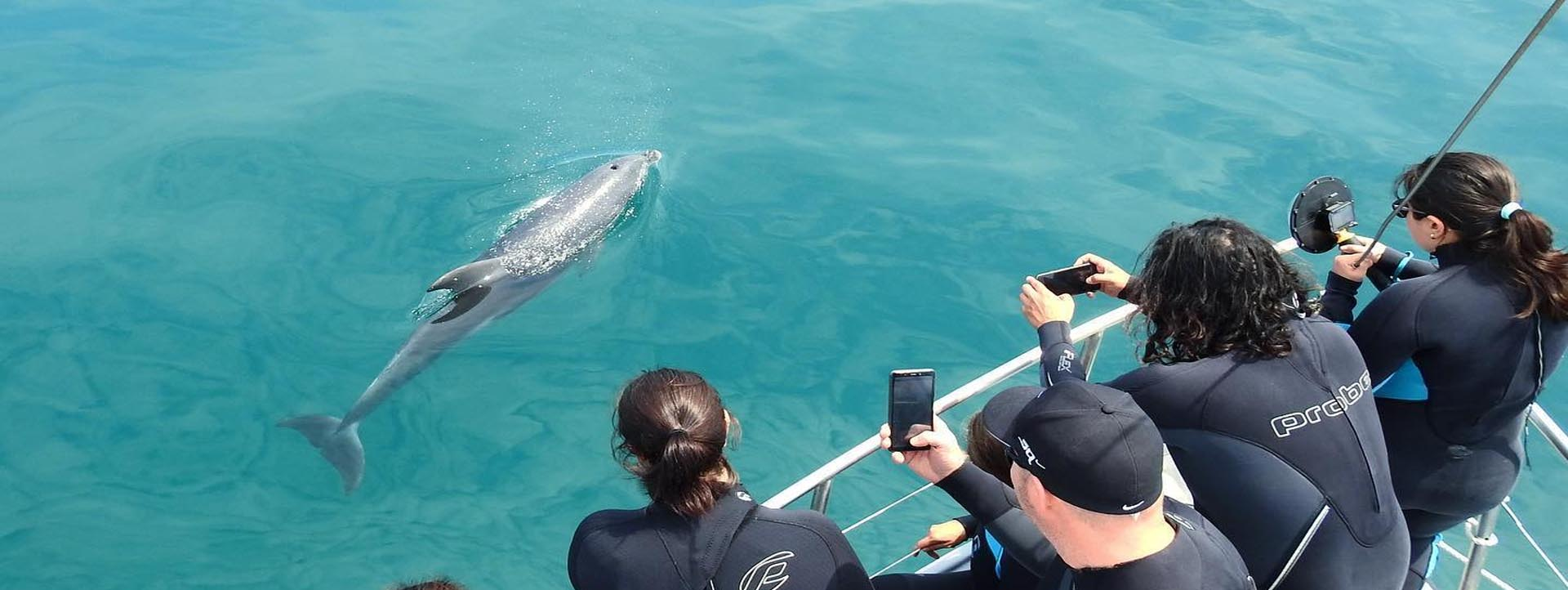 SEAL AND DOLPHIN WATCHING SWIM TOURS