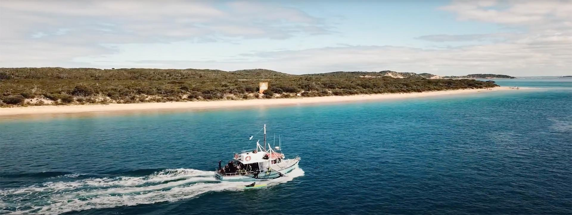 SEAL & DOLPHIN Tours boat Melbourne Maree M