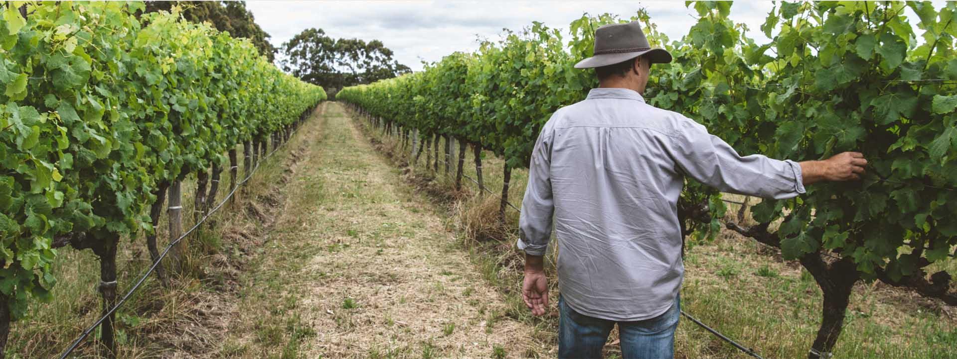 VOYAGER ESTATE vineyards worker vines