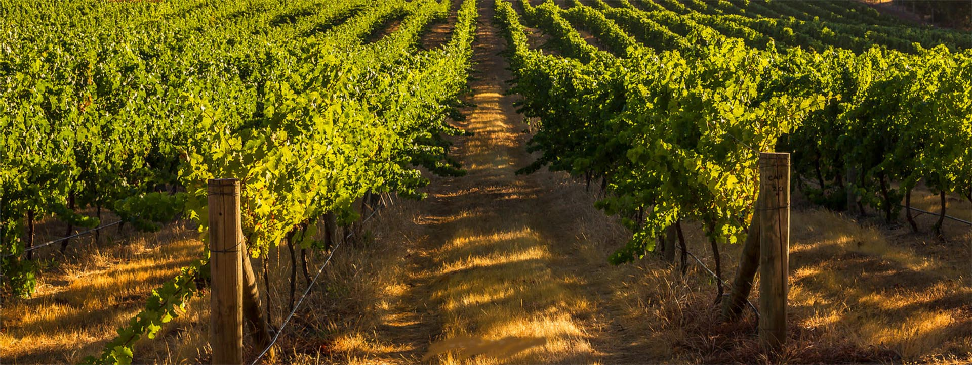 WINERY TOURS WA vineyard